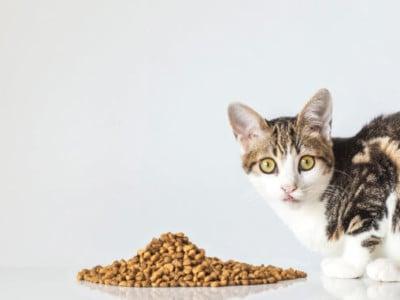 Veggie Animals cat food