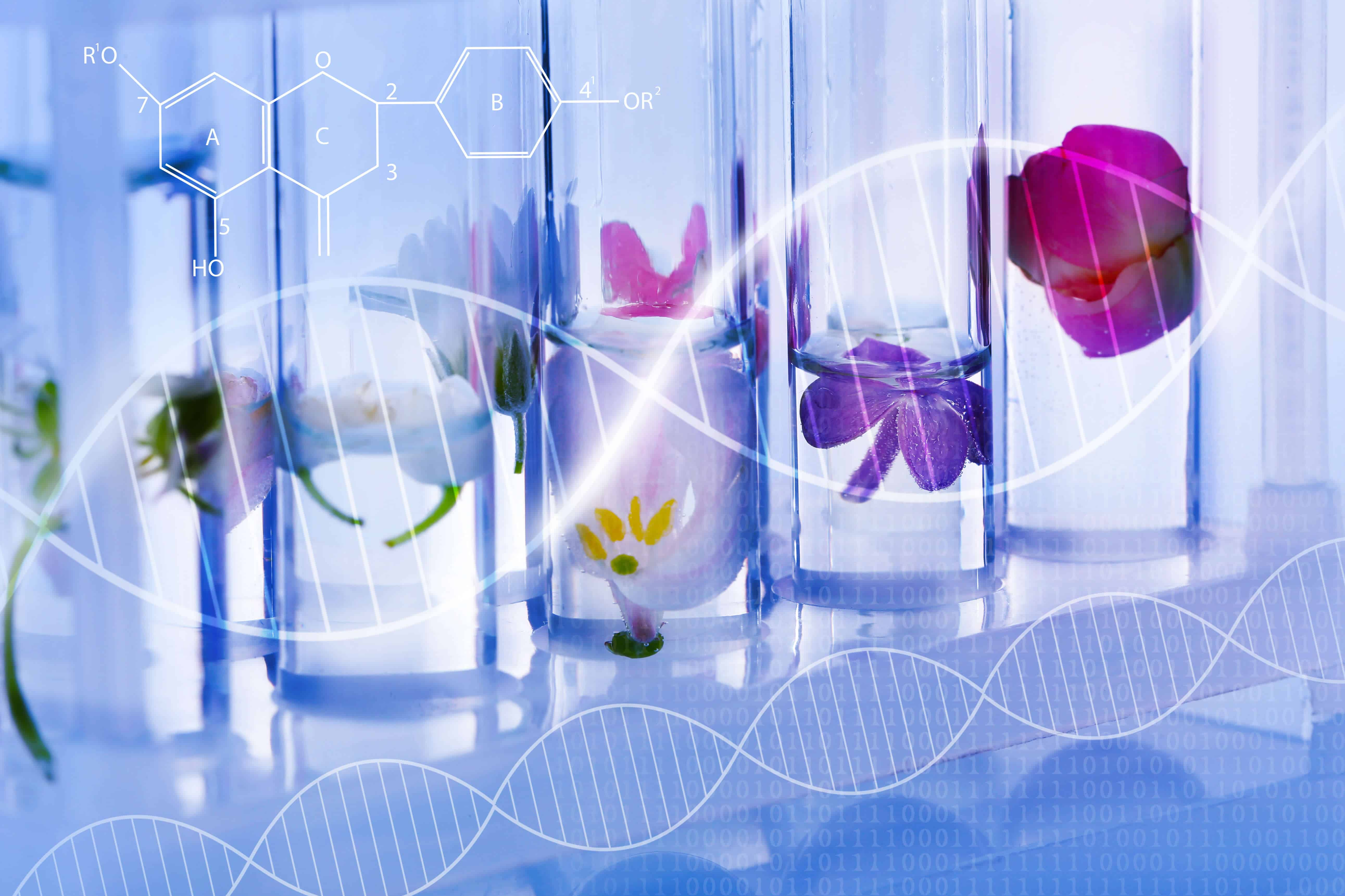Test tubes with different flowers, closeup. Blue toned. Scientific research concept.