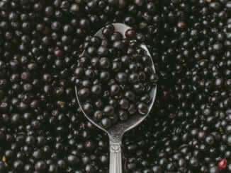Top view of Elderberry or Sambucus Nigra in spoon on background of many row organic dark berries