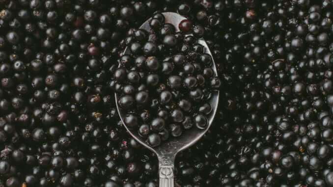 Top view of Elderberry or Sambucus Nigra in spoon on background of many row organic dark berries