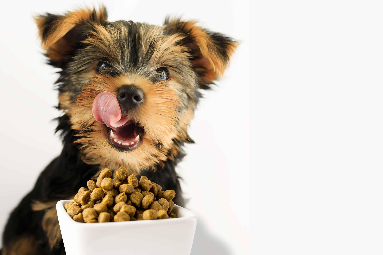 Dog puppy food