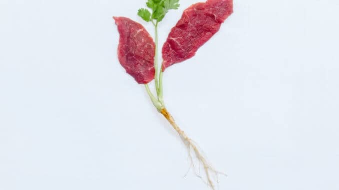 Aleph Farms Beefs Up Clean Meat (002)