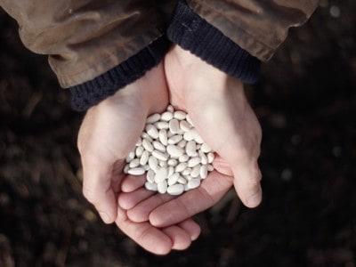 Beans Willicroft