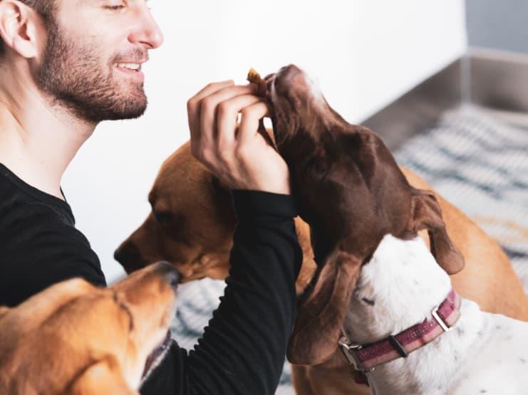 Bond Pet Foods