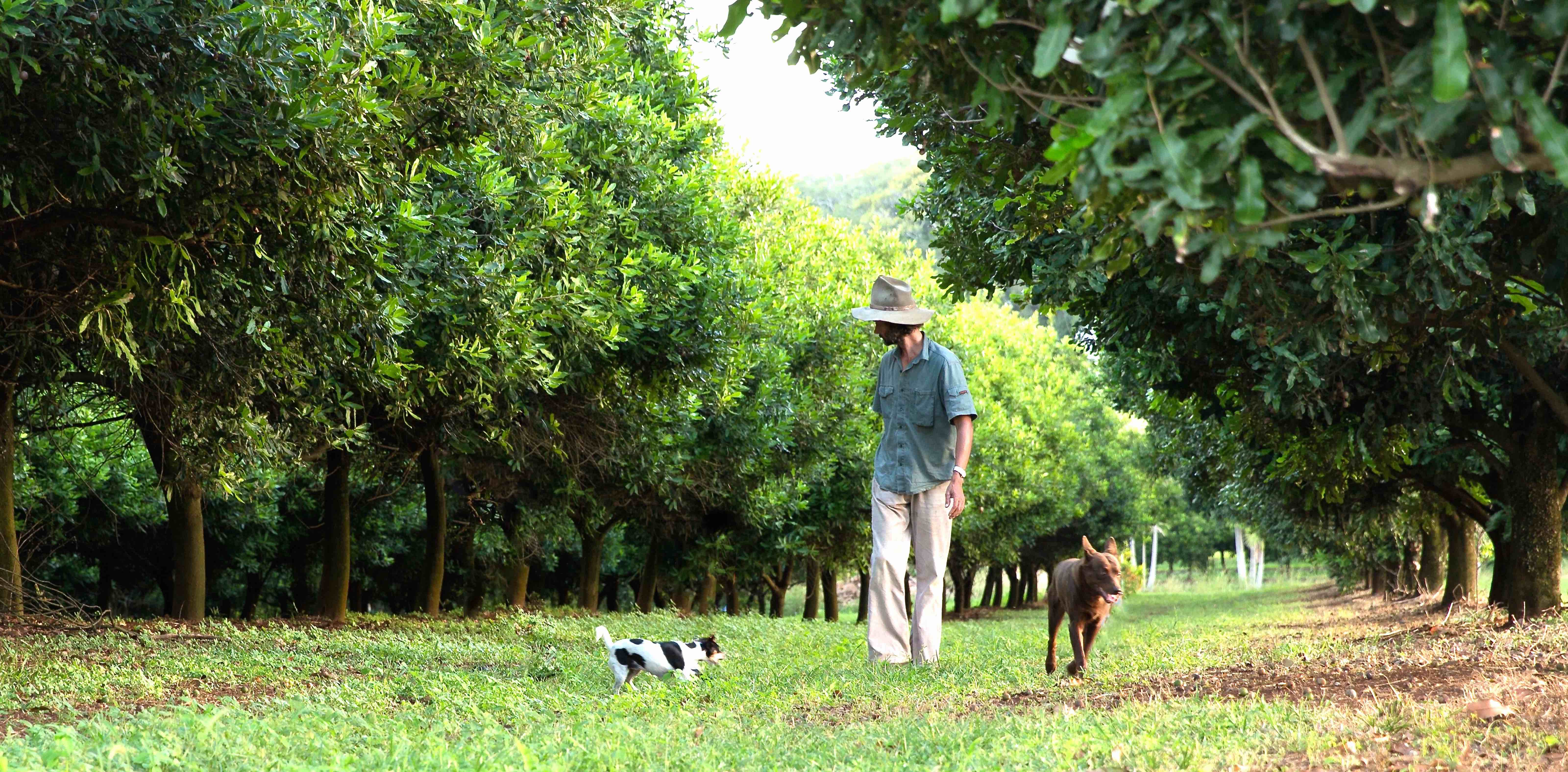 Jindilli Farms
