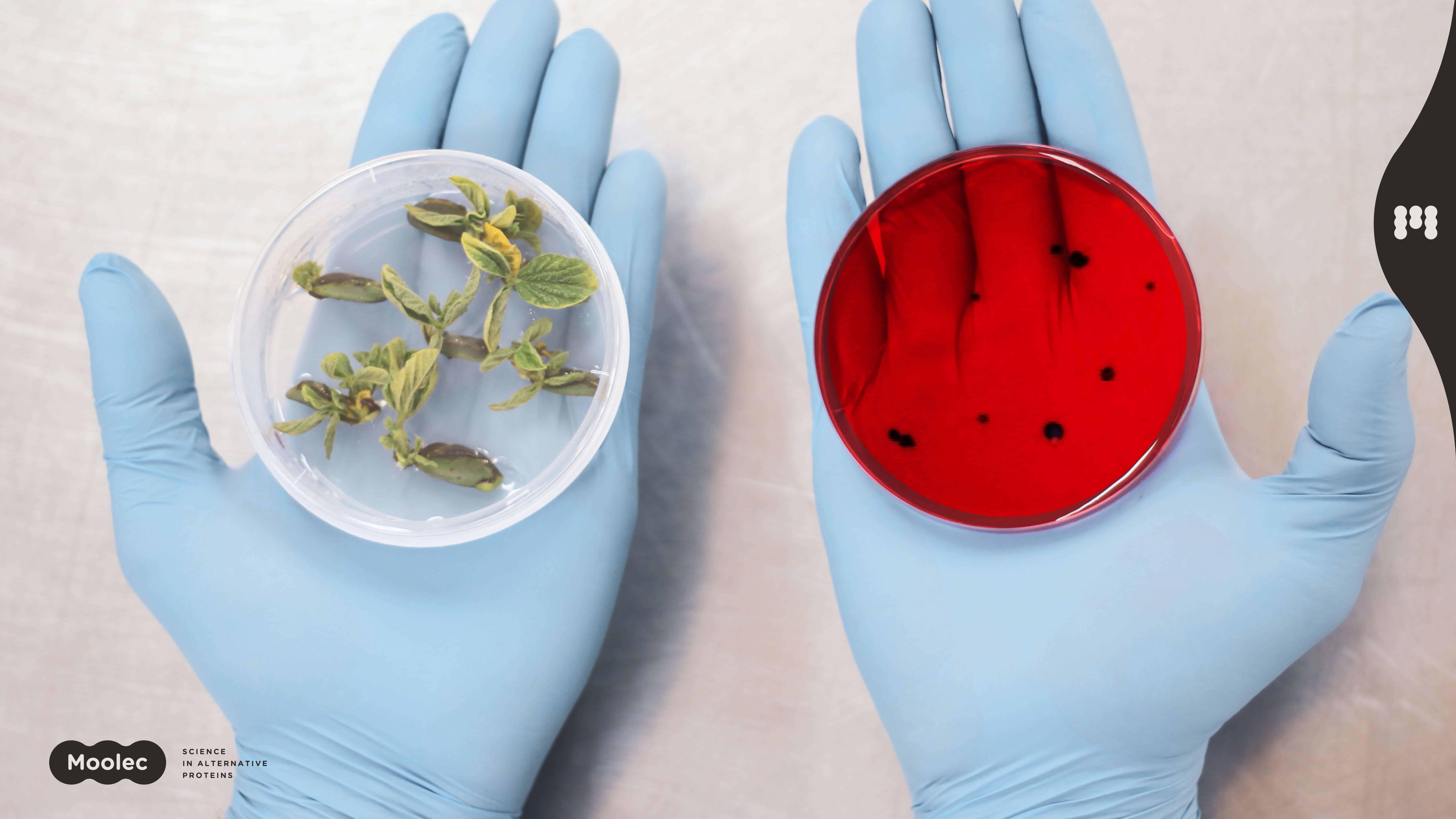 Moolec Science molecular farming