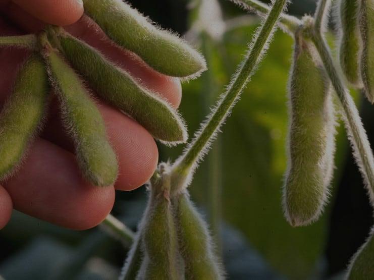 United Soybean board