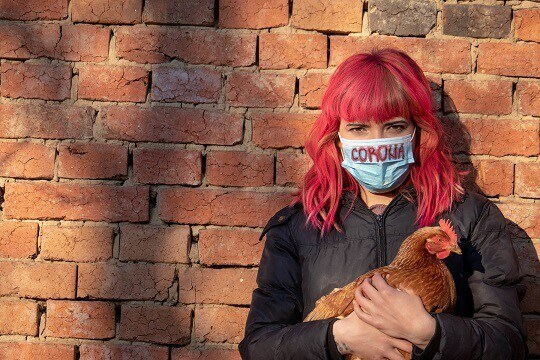 Girl with Corona mask holding chicken. As animal agriculture in China is the main cause of coronavirus, way to fight Corona spreading is to stop using animal products. Go vegan and stop pandemic.