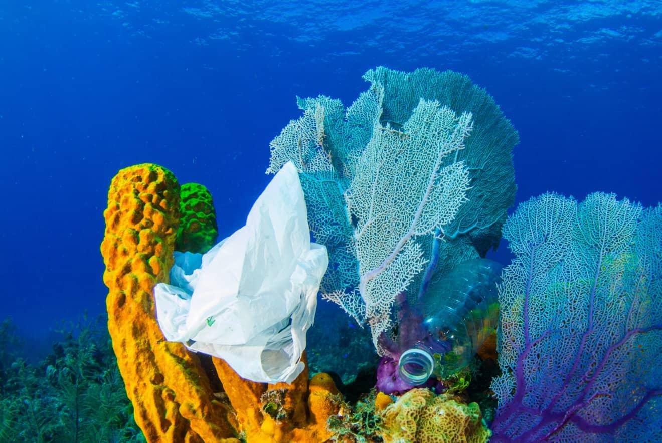 plastic on coral reef