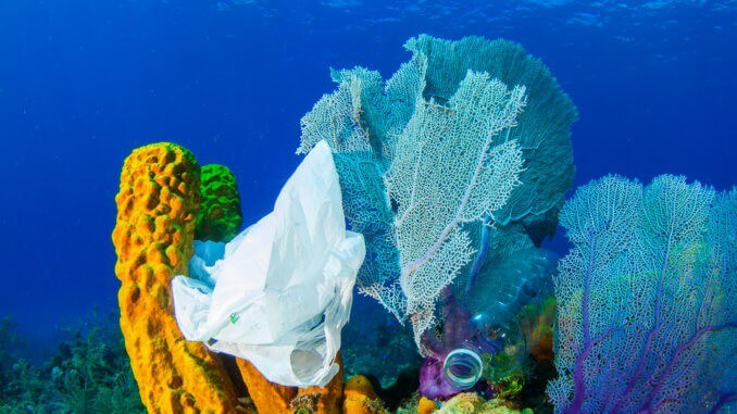 plastic on coral reef