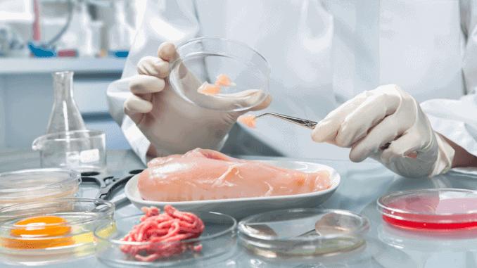 Laborant untersucht invitro-Fleisch im Labor