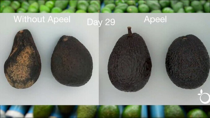 Apeel avocado