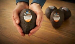 EDEKA-Verbund kooperiert mit Apeel Sciences im Kampf gegen Lebensmittelverschwendung